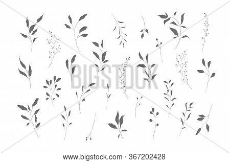 Botanical Silhouette Leaves Hand Drawn Pencil Sketches Isolated On White Background. Fine Art Floral