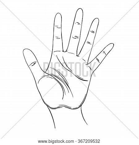 Open Hand. Human Palm. Hand Drawn Illustration. Palmistry Vector Illustration. Ink Style Tattoo Flas