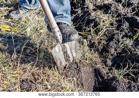 A Worker Digs The Ground With A Hand Shovel In The Garden, A Person Prepares The Soil For Planting C