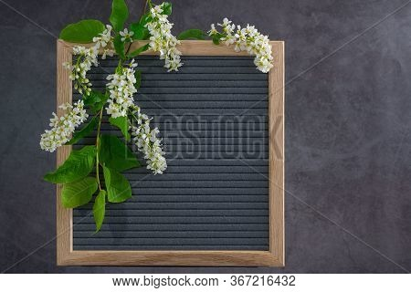 Beautiful Bird Cherry Tree Flowers Frame. Mayday Tree Blossom Branches With Wooden Frame On Grey Bac