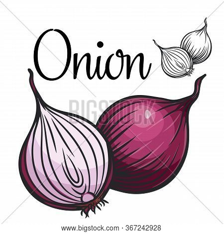Onion Vector Drawing Icon. Vegetable In Retro Style, Outline Illustration Of Farm Product For Design