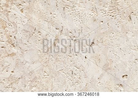 Shelly Limestone Is A Highly Fossiliferous Limestone, Composed Of A Number Of Fossilized Organisms.