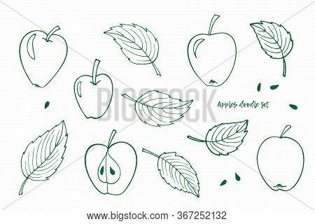 Green Set Of Line Apples, Leaves, Apple Seeds. Minimalistic Sketch. Whole Apples, Apple Halves, Appl