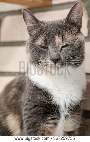 Slumbering Cat Sits On The Brick Wall Background.