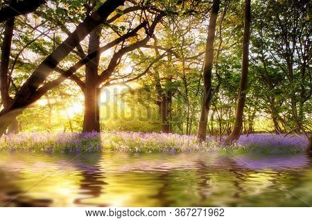 Pond In Bluebell Forest With Sunrise Reflection At Dawn. Woodland Landscape In Spring With Wild Purp