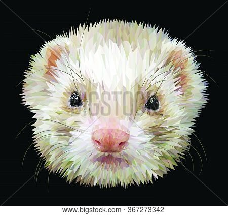 Cute Fluffy Muzzle Of A Ferret Isolated On Black Background. Vector 3d Illustration Eps10.