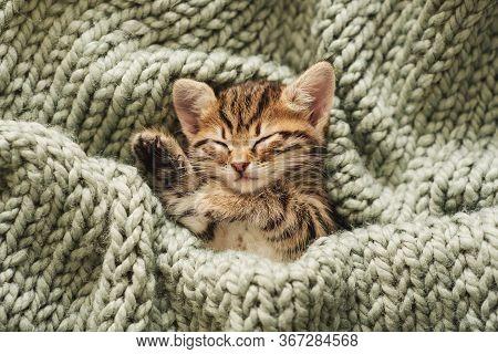 A Small Cute Kitten Is Sleeping On A Green Blanket