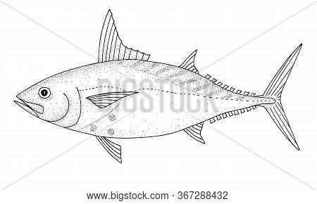Mackerel Tuna (euthynnus Affinis). Ocean Fish. Black And White Hand Drawn Vector Illustration.