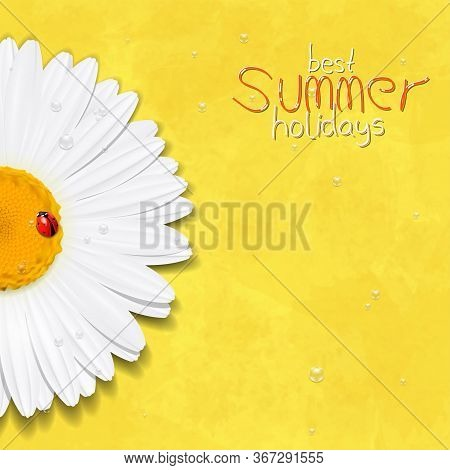 Daisy Summer Flower. Chamomile. Best Summer Holidays. White Flower. 3d Flower. Vector Illustration