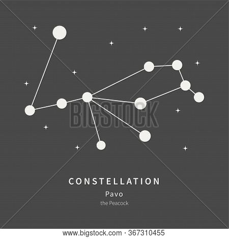 The Constellation Of Pavo. The Peacock - Linear Icon. Vector Illustration Of The Concept Of Astronom