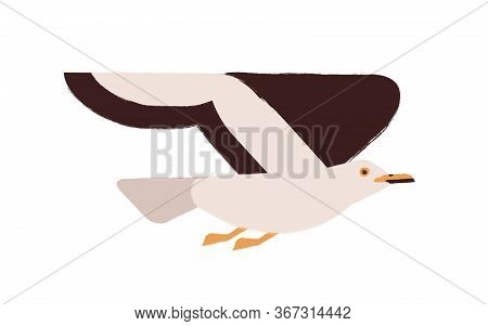 Colorful Flying Seagull Raising Up Wings Vector Flat Illustration. Cartoon Arctic Wild Bird Isolated