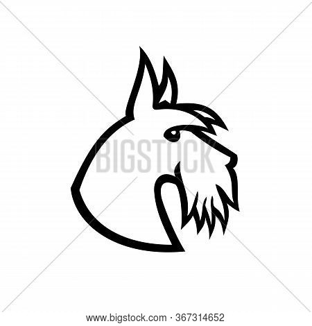 Black And White Illustration Of Head Of A Scottish Terrier, Aberdeen Terrier Or Scottie Dog Viewed F