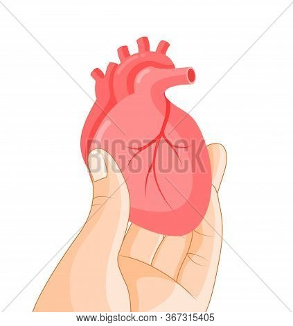 Hand Holding Human Organ, Heart. Human Body Part, Internal Organs. Health Protection Concept. Vector