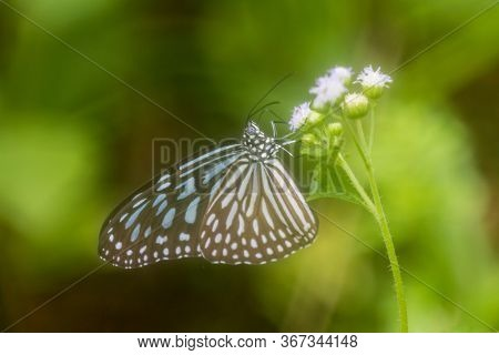 Butterfly on flower with green background