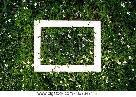 Creative Green Floral Background Of Natural Leaves And Meadow Grass With White Frame Copy Space