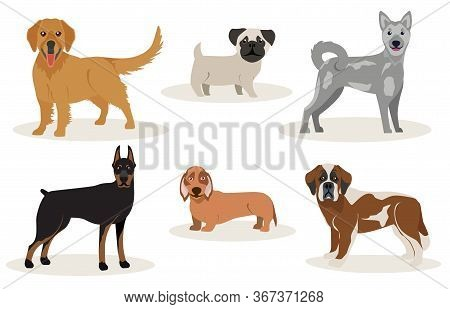 Set Of Hunting Dogs Breeds Vector Illustration. Dogs Breeding Collection Isolated On White Backgroun