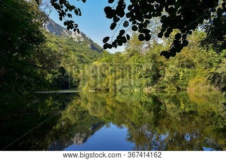 Peaceful Scenery/ Green River In The Forest/ Beautiful Green River Landscape/ Green Oasis/ Forest Re
