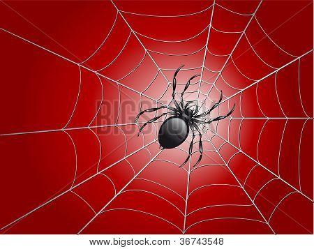 Spider On Wed