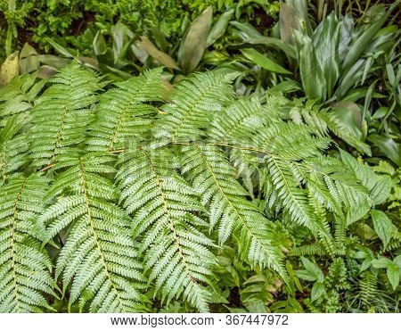 Closeup Shot Of A Green Leaved Fern Frond