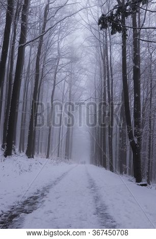 Freak Of Nature. Road In The Fog. The Trees Along The Path Create A Clent, Which Is Very Cramped And