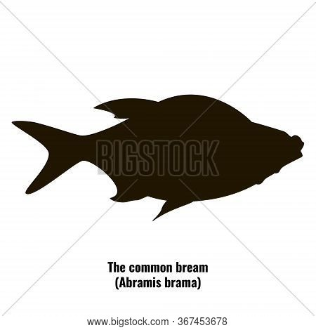 The Black Silhouette Of The Common Bream (abramis Brama) Is Isolated On White Background.