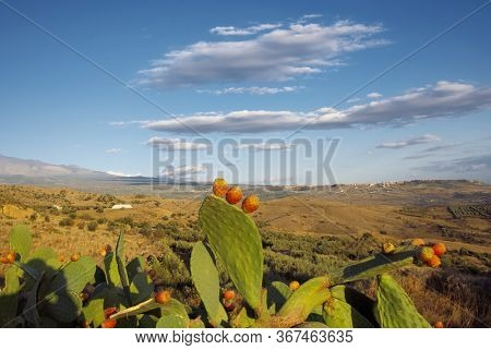 countryside landscape of Sicily with preakly pear and fruit