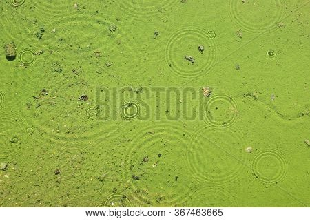 rain circles ripples on clear water surface with a silty greenish bottom