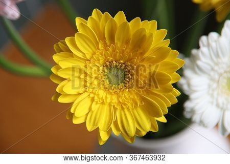 Yellow Gerbera In A Vase In A Bouquet Of The Bolero Cancan Type