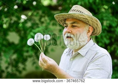 Beautiful Flower In Hand. Spring Village Country. Symbol Of Thin Gray Hair. Old Man Blow Dandelion.