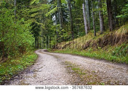 Cycling Through Forest On A Rainy Day. Rocky Road In Forest Nature. Green Forest Road. Nature. Road.