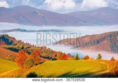 Valley Full Of Fog. Autumn Landscape At Sunset. Forest In Colorful Foliage On The Grassy Hill. Beaut