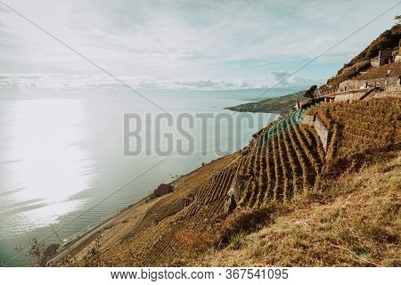 Lavaux, Switzerland: Lake Geneva Landscape Seen From Lavaux Vineyard Tarraces In Canton Of Vaud