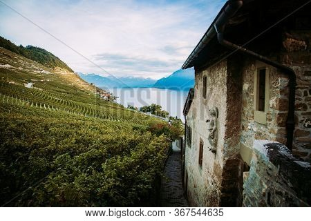 Lavaux, Switzerland: Lake Geneva, Green Vineyards And Old Hause On Lavaux Vineyard Hiking Trail In C
