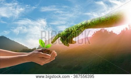 Environment Earth Day Hands From Nature. Girl Hands Holding Trees Growing On Nature Mountain Backgro