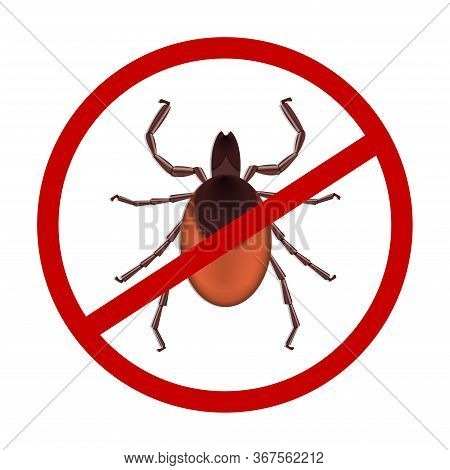 Mite Parasites. Tick Parasite. Acarid Vector Illustration Isolated On White Background. Mite Spider.