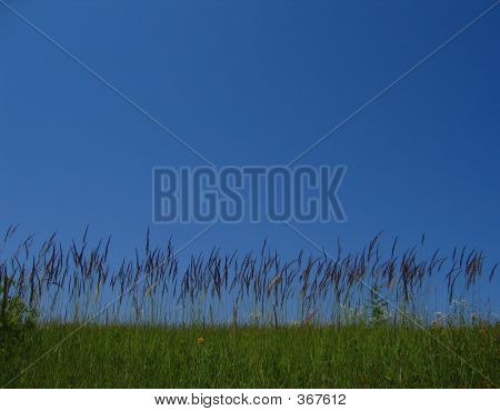 04_grass_filtered
