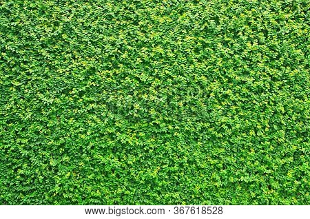 Green Grass Wall Texture, Natural Green Leaves Wall Background, Eco Wall
