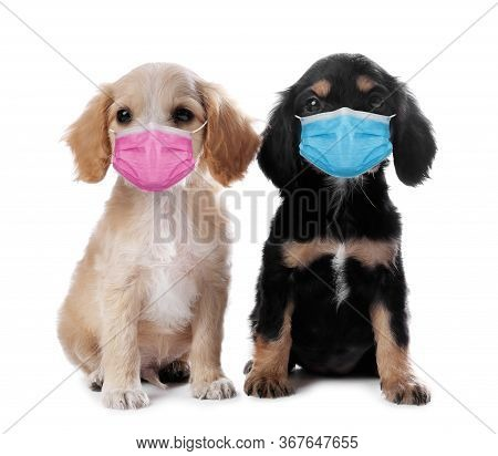 Cute English Cocker Spaniel Puppies In Medical Masks On White Background. Virus Protection For Anima