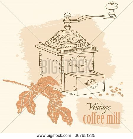 Vintage Coffee Mill With Beans And Coffee Tree Brunch, Hand Drawn Sketch Vector Illustration.