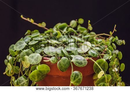 Close-up On Dainty Vines Of A