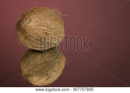 Large Shaggy Coconut Isolated On A Red Mirror Surface With Reflection