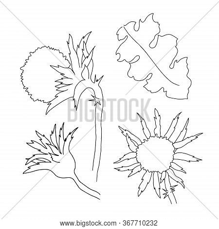 Milk Thistle Wild Flowers And Leaves Set Vector Outline Illustration, Simple Botanical Image In Hand