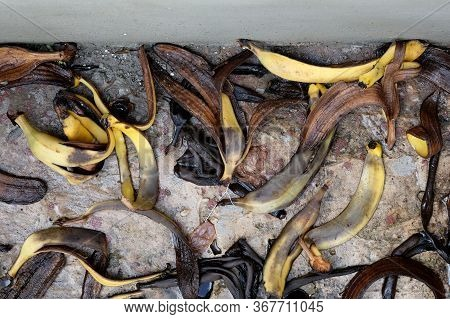 Brown Banana Peel Top View. The Peel From Bananas Rots On The Road On The Street. Using A Banana Pee