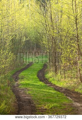 Forest Path With Spring Mud Among Trees With Young Foliage