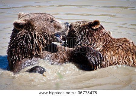 Bears Playing
