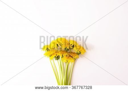 Spring Yellow Dandelion Flowers Flat Lay On White Background Top View With Copy Space. Flowers Compo