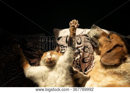 Dog And Cat Relax In Bed