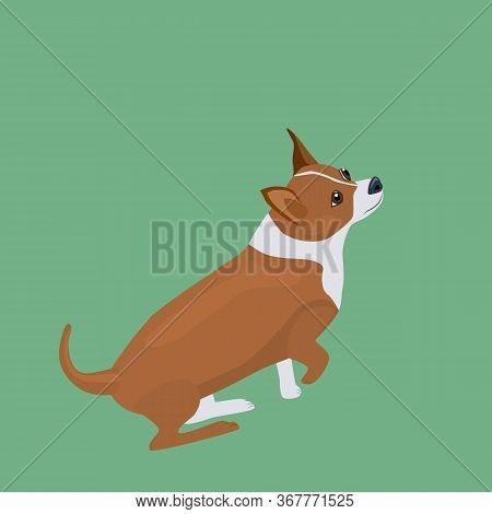 Cute Little Dog Is Looking Up. Doggy Breed Chihuahua. Vector Illustration
