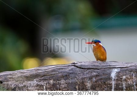 A Malachite Kingfisher, Brightly Coloured Young Male Sitting On Rock