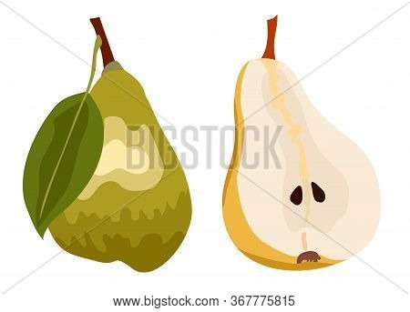Green Pear Isolated On White Background. Cross Section Of Cut Pear And Whole Fruit. Isolated Vector
